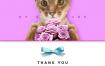 15款宠物简约时尚海报banner素材PSD源文件打包下载