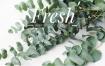 小清新欧美英文植物绿色社交网页微博客广告banner海报素材