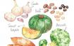 10款美食素材水果蔬菜柠檬桃子香蕉茄子木瓜插画海报PSD设计素材