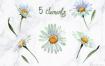 手绘水彩雏菊花朵植物蒙版边框海报背景图案服装png免抠素材