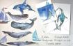 海洋鲸鱼手绘水彩卡通插画装饰画芯数码印刷PNG设计ps素材图