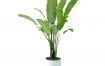 15款植物盆栽盆景PSD素材下载