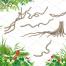 花卉框架和边界与热带植物。套鸟,叶子和花绿色热带天堂矢量素材打包下载