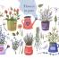 149款紫色浪漫普罗旺斯薰衣草花店名片水印手绘水彩PNG免抠设计素材