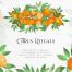 橙色桔子柑橘绿色叶子新鲜水果手绘水彩蒙版装饰PNG免抠素材