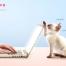 10款可爱宠物猫咪狗狗和人生活工作海报画报PSD模板设计素材文件